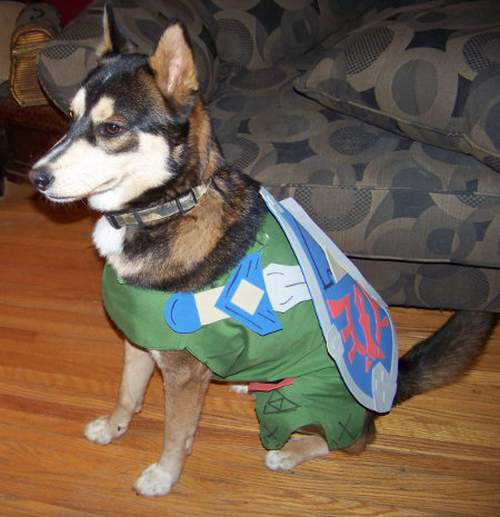 link-dog-1