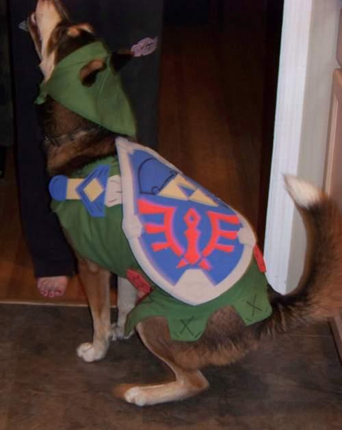 link-dog-2