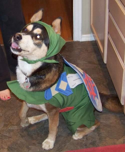 link-dog-3