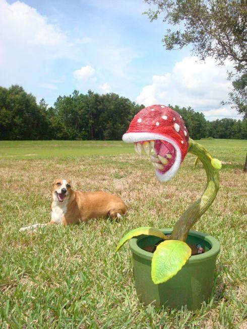 piranha plant diy