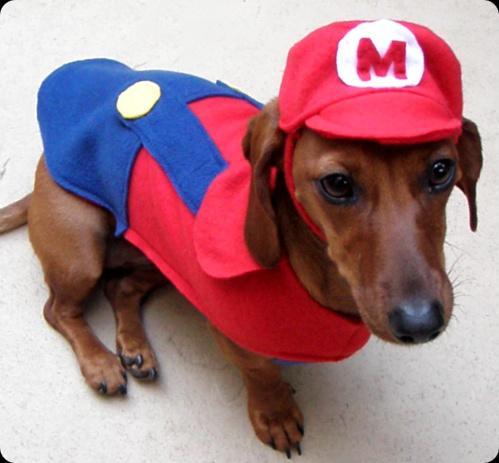 super mario dog